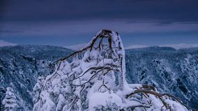 Wysuszony drzewo na śniegu w zima sezonie fotografia stock