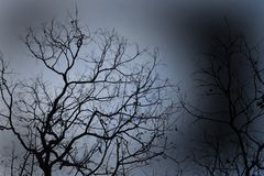 Wysuszony drzewo w ostrości fotografia stock