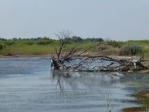 Wysuszony drzewo w rzece zdjęcia stock