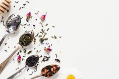 Wysuszony herbaciany liść, ziołowy, i zielona herbata w herbacianych łyżkach Fotografia Stock