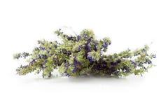 Wysuszony hizopu ziele odizolowywający na bielu Zdjęcia Stock
