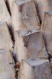 Wysuszony korowaty palmowy liść Obrazy Stock