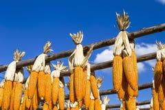 Wysuszony kukurydzany obwieszenie na drewnianym poręczu Obraz Royalty Free