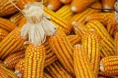 Wysuszony kukurydzany tło i tekstura Zdjęcia Royalty Free