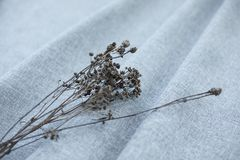 Wysuszony kwiat na szarej tkaninie obraz stock