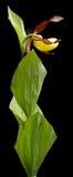 Wysuszony kwiat na tle Fotografia Royalty Free
