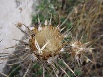 Wysuszony kwiat w zima sezonie Fotografia Stock