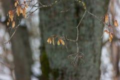Wysuszony liść w lesie Obraz Royalty Free