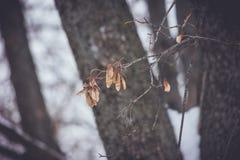 Wysuszony liść w lesie Obrazy Royalty Free