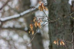 Wysuszony liść w lesie Fotografia Stock