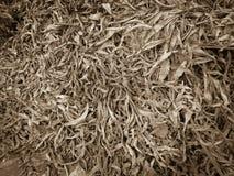 Wysuszony liścia tła wzór Fotografia Stock