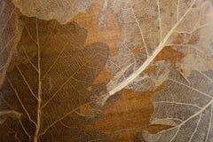 Wysuszony liścia tło Zdjęcie Royalty Free