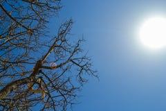 Wysuszony - out drzewo Obrazy Stock