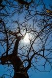 Wysuszony - out drzewo Fotografia Stock