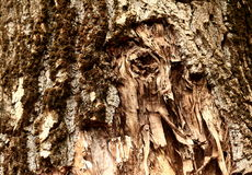 Wysuszony - out i pękający drzewnej barkentyny tekstury tło Zdjęcia Stock