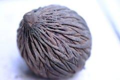 Wysuszony palmowy owocowy bardzo stary brąz obraz royalty free