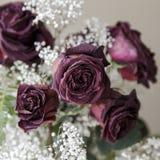 Wysuszony Różany bukiet w Niemych brzmieniach fotografia royalty free