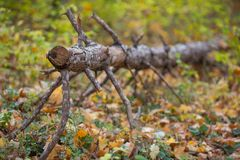 Wysuszony ramiform drzewo na jesieni tle obrazy royalty free