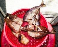 Wysuszony ryba i czosnku exposé słońce obraz stock