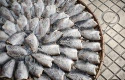 Wysuszony rybi exposé słońce fotografia royalty free