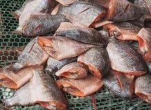 Wysuszony rybi exposé słońce przez długi czas fotografia stock