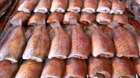 wysuszony rybi gourami solący skóry wąż Zdjęcia Stock
