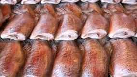 wysuszony rybi gourami solący skóry wąż Obraz Stock