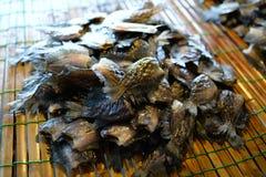 wysuszony rybi gourami solący skóry wąż Obrazy Stock
