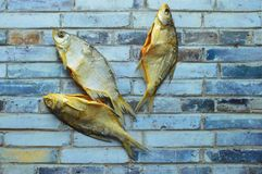 Wysuszony solony rybi vobla na szarym tle zdjęcie royalty free