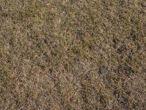 Wysuszony trawy tło Bezszwowa tekstura ziemia Zdjęcie Royalty Free