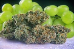 Wysuszonych marihuana pączków małpy Gronowy napięcie z świeżą owoc - medica Fotografia Stock