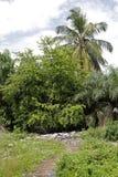 Wysypisko między drzewami i palmami Obrazy Royalty Free