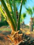 wyszczególnia palmy Zdjęcie Royalty Free