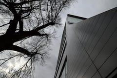 wyszczególniający wysoce domowy ilustracyjny drzewo Zdjęcie Royalty Free