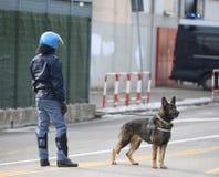 wyszkoleni milicyjnego psa cyzelatorstwa leka handlowowie i kryjący środki wybuchowi obraz royalty free