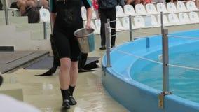 Wyszkolona futerkowa foka zbiory