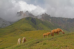 Wyszukiwać konie Di Terrarossa i Denti Zdjęcia Royalty Free
