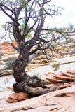 Wytrwały drzewo zdjęcie royalty free