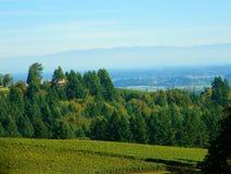 Wytwórnia win na Mgłowym dniu Zdjęcia Stock