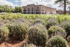 Wytwórnia win w Mendoza Argentyna Zdjęcia Stock