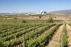 Wytwórnia win w prowinci Huesca, Hiszpania Zdjęcie Stock