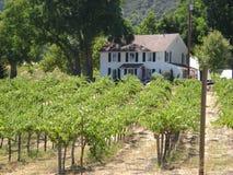 Wytwórnia win w wino kraju Obrazy Stock