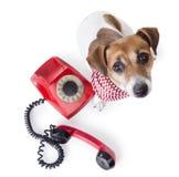 Wywoławczy center> psa telefon Zdjęcia Royalty Free