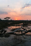 Wywrócony drzewo przy zmierzchem Obraz Royalty Free