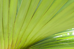 Wzór agawa liście Obraz Royalty Free