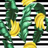 Wzór banany i zieleń opuszcza na pasiastym tle tropikalny tło Zdjęcia Stock