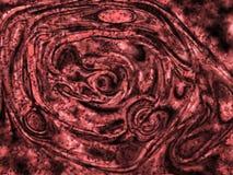 wzór biologicznego abstrakcyjne Zdjęcie Royalty Free