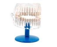 wzór dentystycznego Obrazy Royalty Free