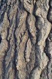 Wzór drzewna barkentyna Tło Piękna tekstura obraz stock