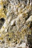Wzór enbedded w kamieniu łyszczyk fotografia stock
